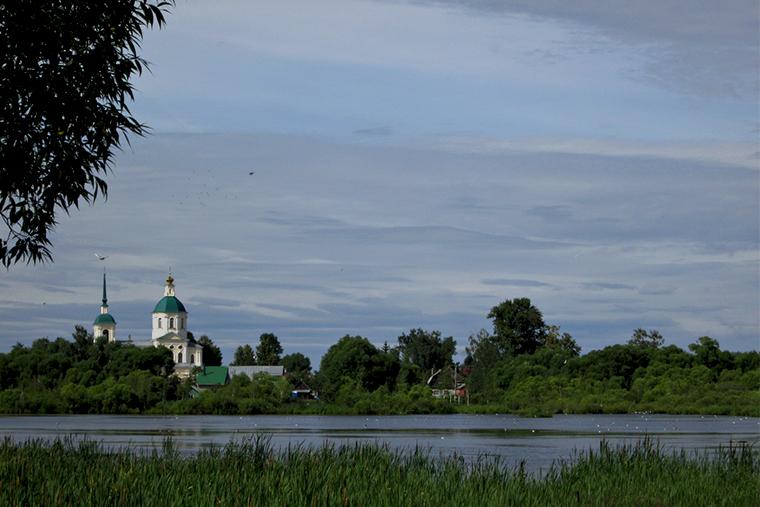 Чайка озерная Киово