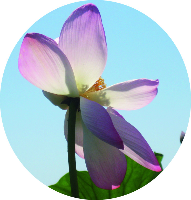 Цветок в кругу