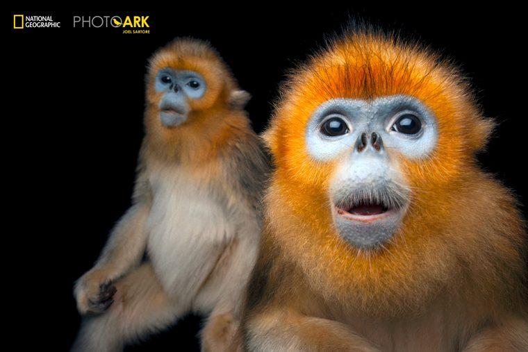 Фотопроект National Geographic Photo Ark in