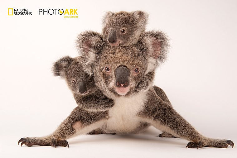 Фотопроект National Geographic Photo Ark in