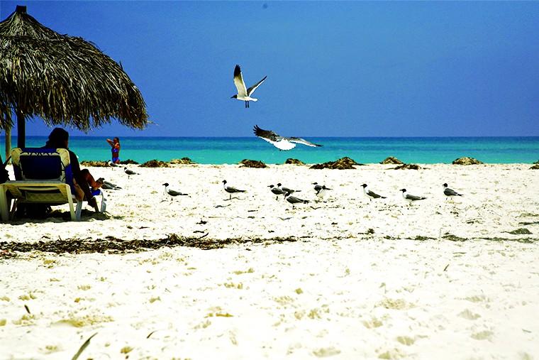 Куба остров свободы Кайо-Ларго  in4