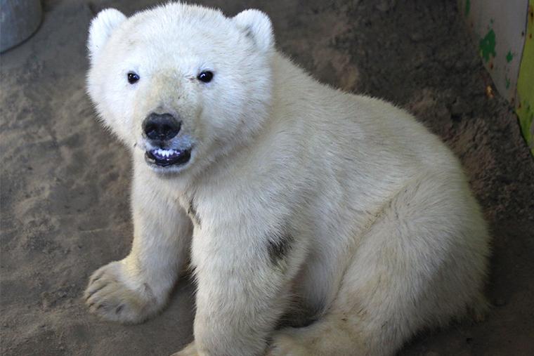 Медвежонок in