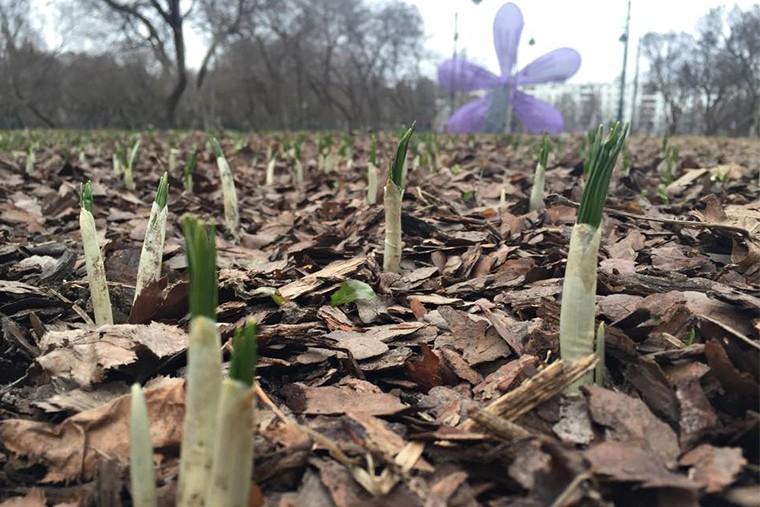 Первые цветы в парках in4