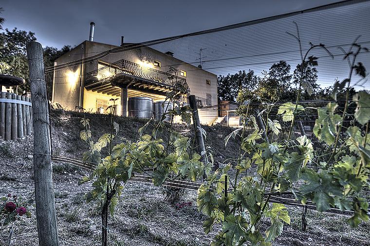 Кантина (винодельня) Ca'Botta на озере Гарда, видны бочки с Гарда Классика Кьяретто ДОК и Рислинг ДОК