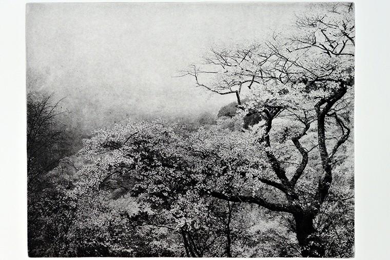 Питер Миллер. Вторая весна. 2011. Фотогравюра