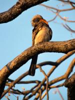Птицы в национальном парке