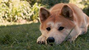 фили-собаки