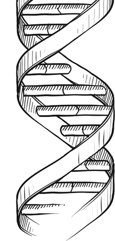 ген-2