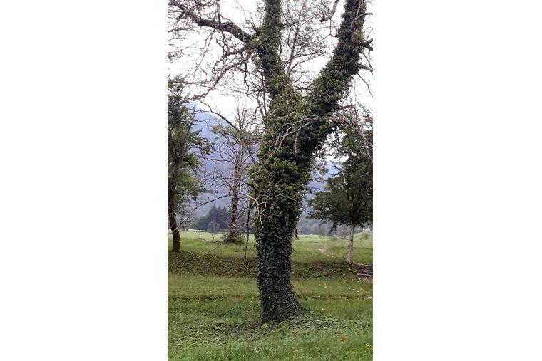 республика Сербская Национальный парк Сутьеска 6