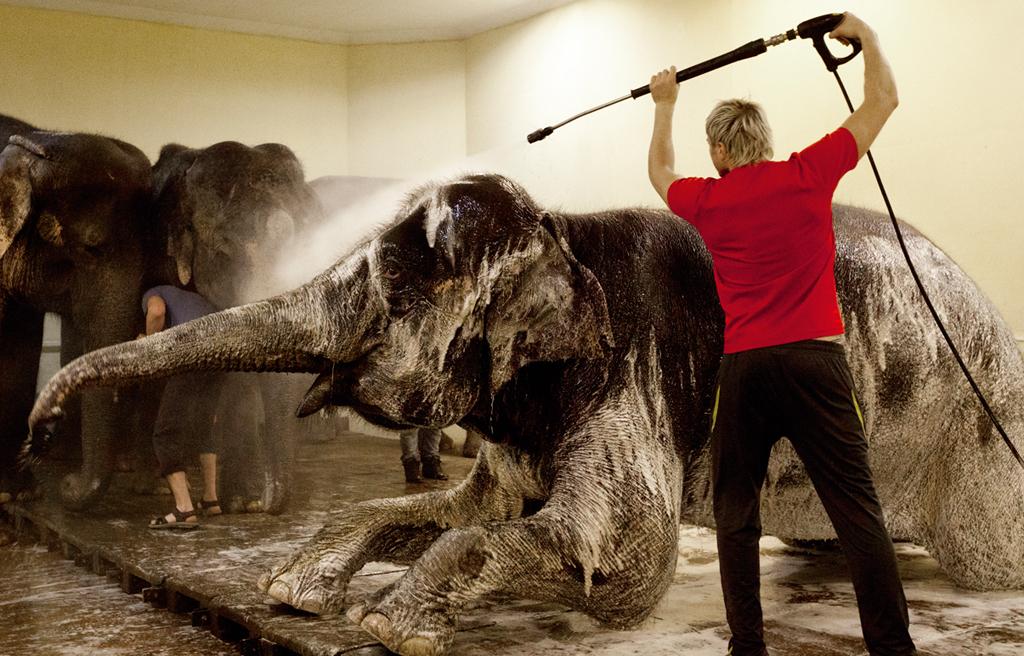 Будни в слоновнике